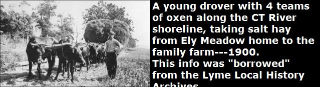 1999.018.005-Four-ox-teams-drover-Salt-Hay-Elys-Meadow-Lyme-012a.jpg-300x174